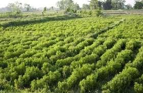 'सिम उन्नति' बनाएगी किसानों को उन्नत