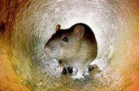 चूहे डकार गए थाने में जमा शराब, खाली बोलतें छोड़ गए
