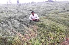 ओलावृष्टि और बेमौसम बारिश की मार झेल रहे किसानों के लिए राहत की खबर, सर्वे के आधार पर मिलेगा मुआवजा