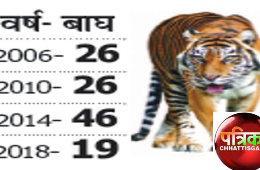 राज्य में 19 बाघ, प्रत्येक पर 50 लाख रुपए हर साल खर्च, फिर भी न ढूंढ रहे न बचा पा रहे