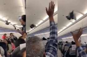 गो एयर के विमान में घुसे कबूतर, देखकर यात्री हुए हैरान