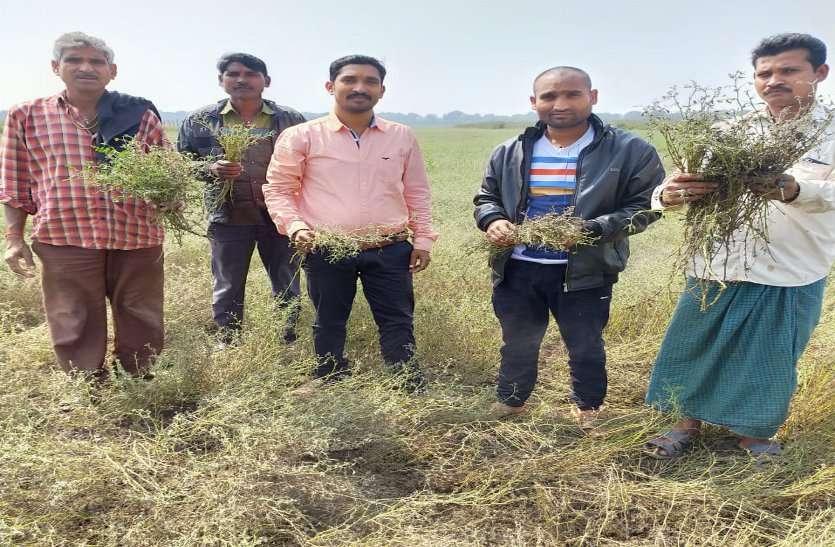 ओलावृष्टि व बेमौसम बरसात ने खींची किसानों के माथे पर चिंता की लकीरें