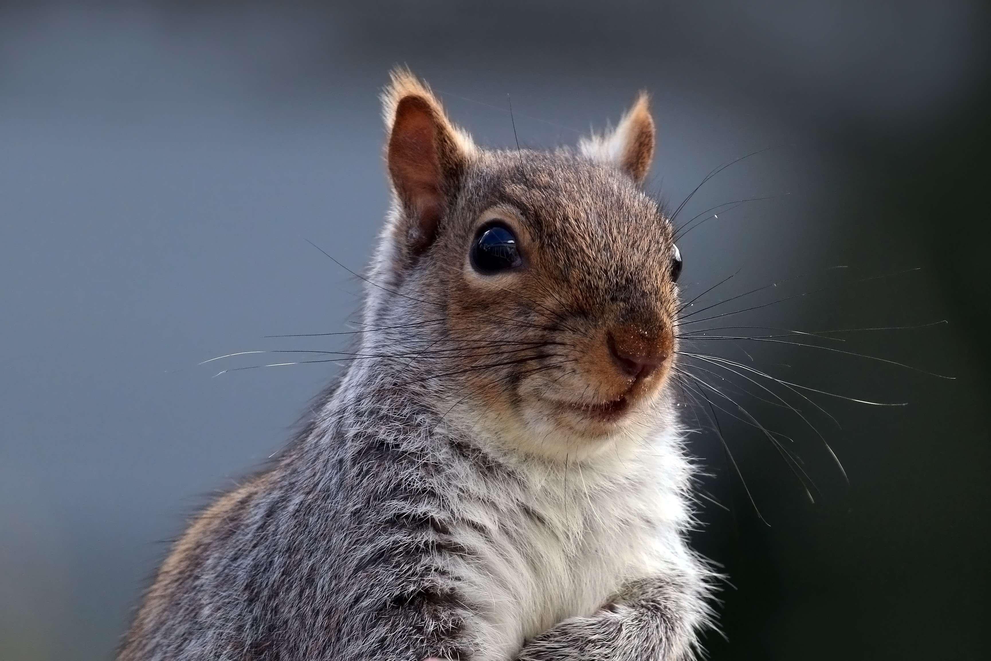 घर में ऐसा करते दिखे गिलहरी तो समझ लें, आपको जल्द मिलने वाली है बड़ी खुशखबरी