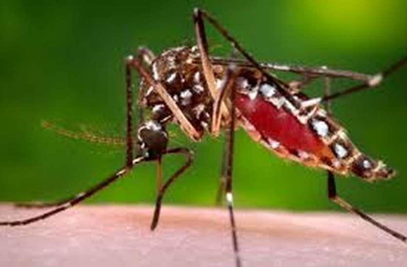 मच्छरों के उत्पात पर मनपा गंभीर