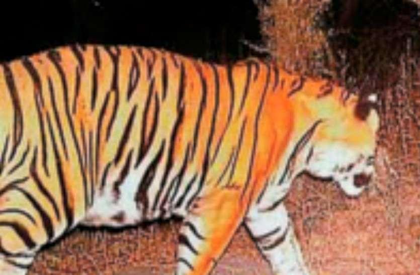 बाघों का शिकार करने के दो आरोपी गिरफ्तार