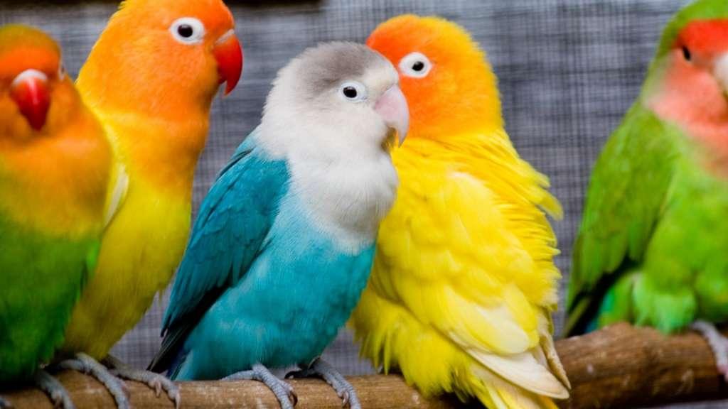 सपने में दिखाई दे कोई पक्षी तो समझ लें आपको मिलने वाली कोई बड़ी जिम्मेदारी