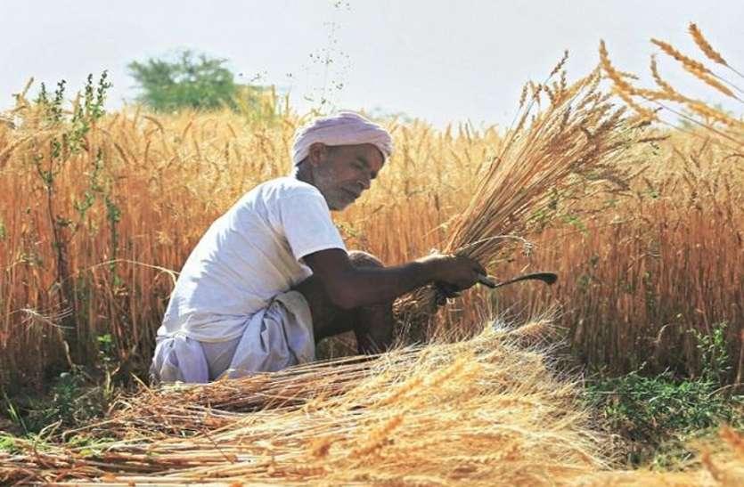काेराेना के खाैफ के बीच किसानों काे फसल कटाई की चिंता, नहीं आ रही मशीनें