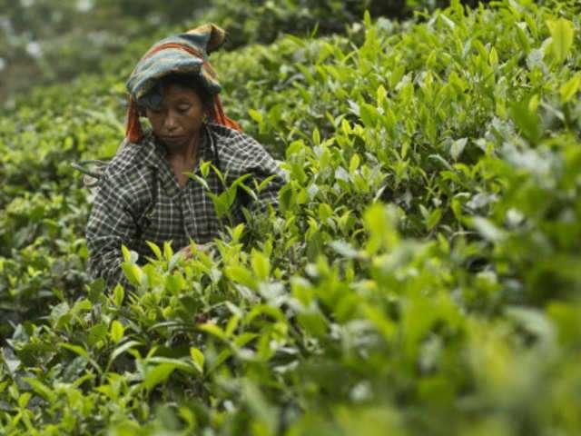 indian_tea.jpg