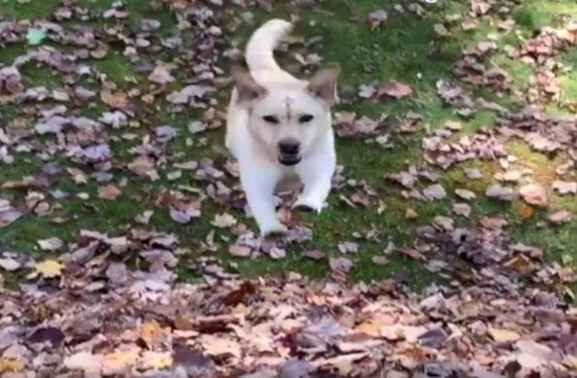 पत्तों के ढ़ेर में कुत्ते ने की गज़ब मस्ती, वीडियो देख लोगों को मिला सुकून