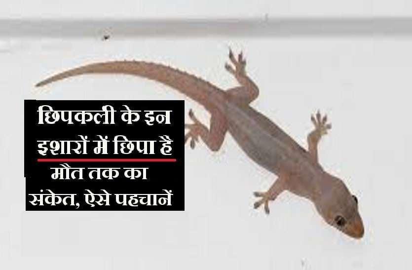 https://www.patrika.com/bhopal-news/-1-2826525/