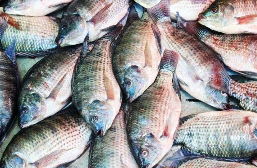 मछलियों के लिए छोड़ दी प्रोफेसर की नौकरी, महीने की कमाई ₹1 लाख रुपए