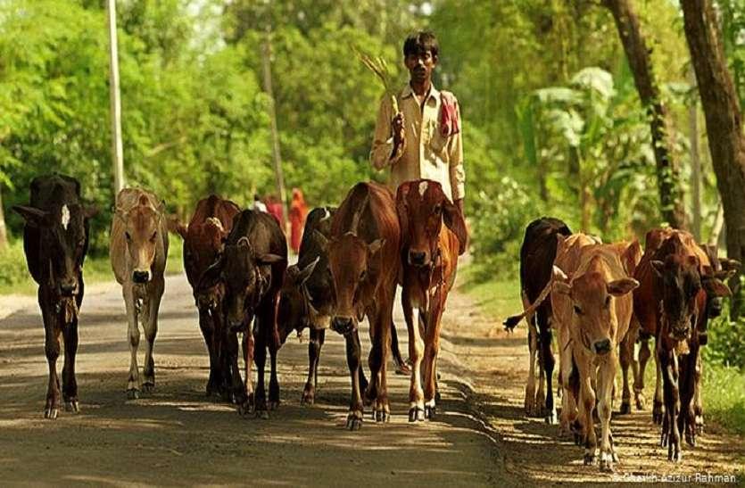 कोरोना के कहर बीच हरियाणा के इस गांव में एक नया कहर