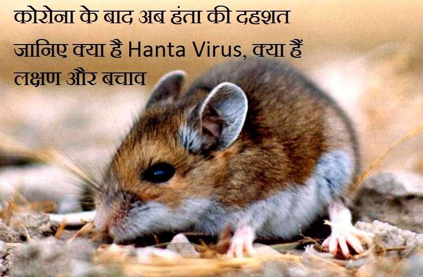 कोरोना के बाद अब हंता की दहशत, जानिए क्या है हंता वायरस, क्या हैं लक्षण और बचाव