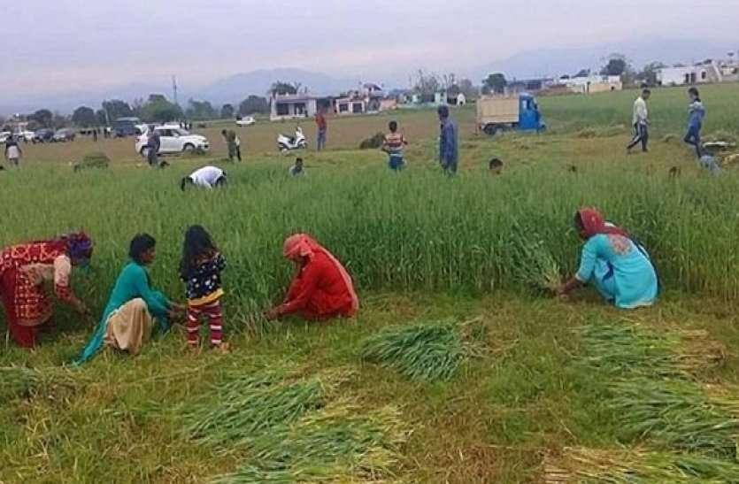 ध्यान दें किसान, फसल काटते समय पहनना होगा मास्क, कृषि विभाग ने जारी की यह गाइडलाइन