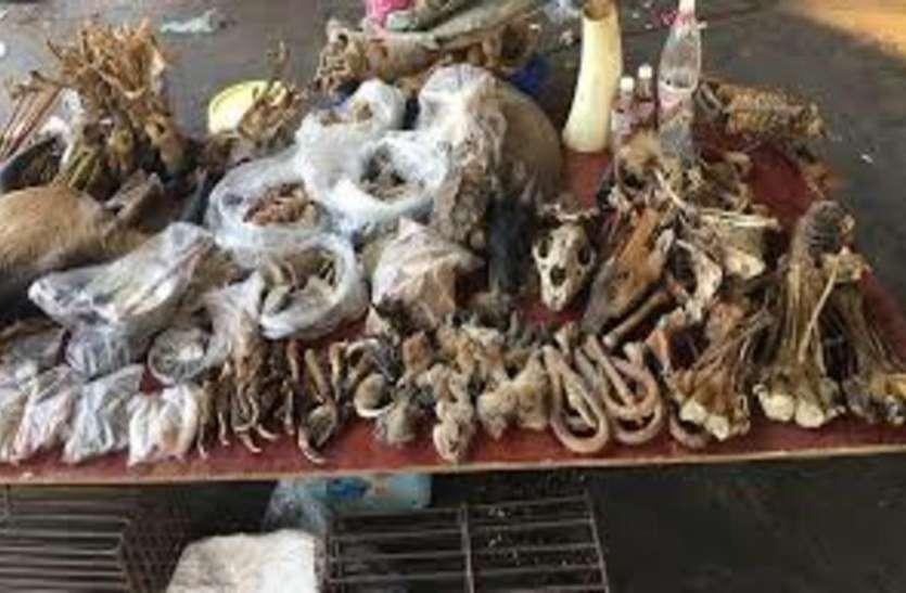 कोरोना वायरस : चीन का कम नहीं हुआ नॉनवेज प्रेम, इलाज के लिए जानवरों के अंगों से बनाई दवाई