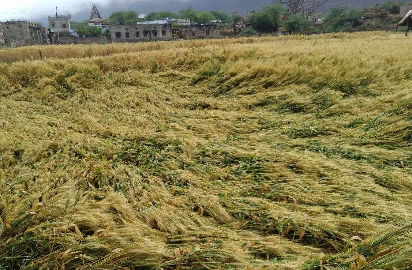बदले मौसम ने किसानों के सपनों पर फेरा पानी