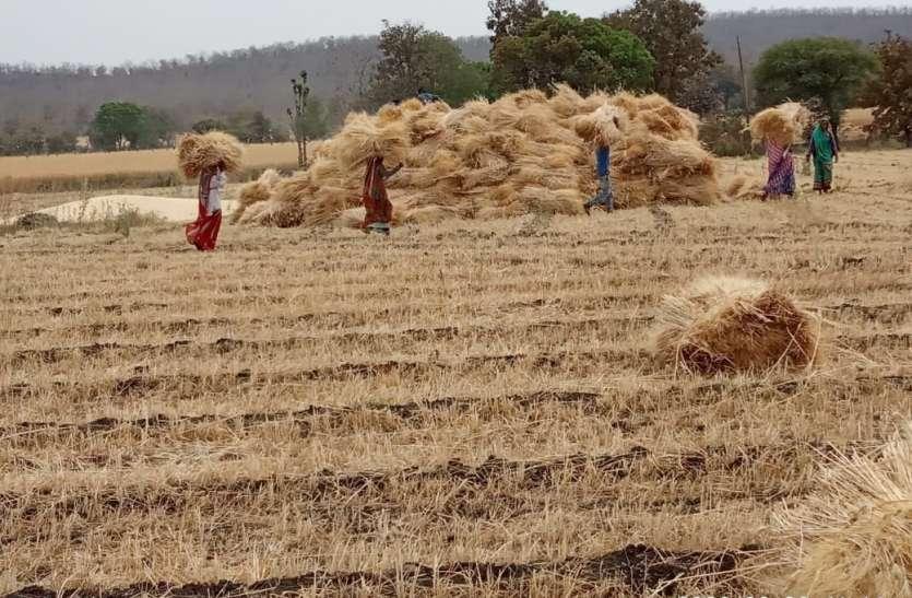 खेत जाए तो पुलिस पीटे, फसल पर बारिश और चोरी का खतरा
