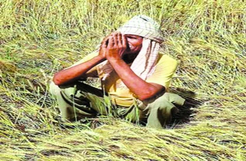 किसानों ने की गिरदावरी कर मुआवजा दिए जाने की मांग