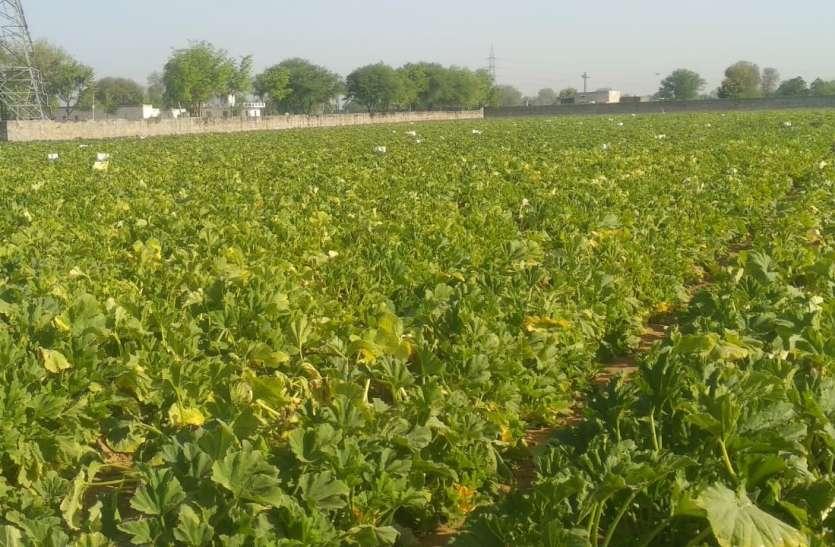 लॉकडाउन: किसानों की कमाई लॉक, सब्जी मंडियों में लाखों रुपए का व्यवसाय धरातल पर