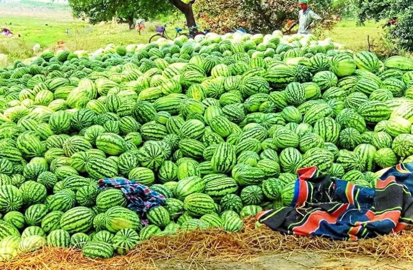 तरबूज के नहीं मिल रहे खरीदार, किसानों को हो रहा लाखों का नुकसान