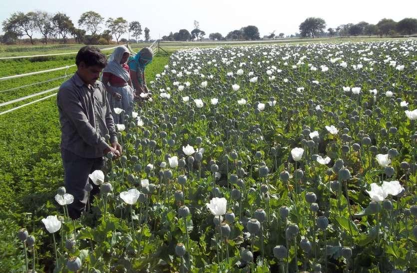 अफीम तोल बंद होने से किसानों की बढ़ेगी चिंता