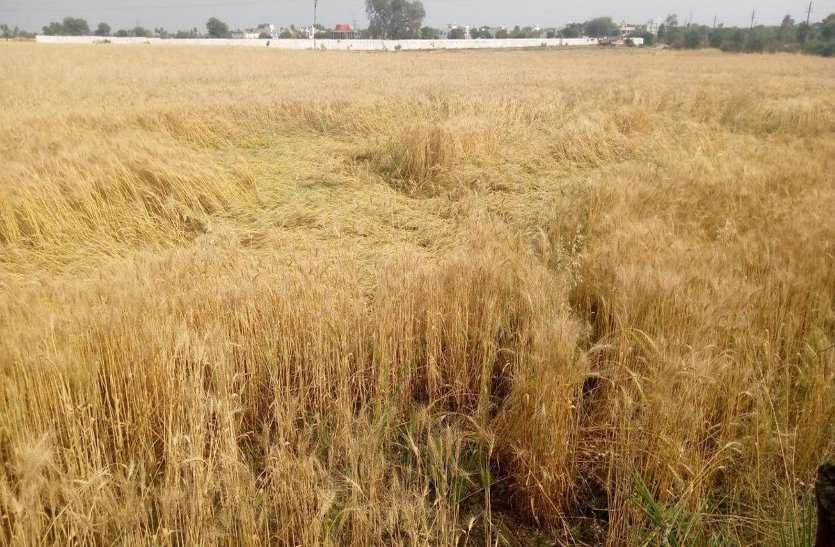कोरोना और मौसम की मार के बीच दाव पर अन्नदाता की फसल