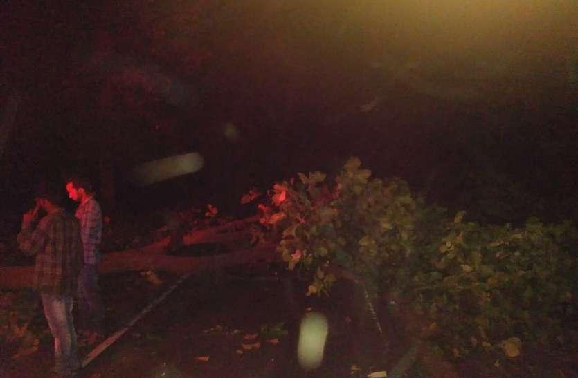 लॉकडाउन में एक बाइक पर 2 लोगों के बैठने की है मनाही लेकिन 4 हो गए सवार, रास्ते में चारों पर गिर गया विशाल पेड़