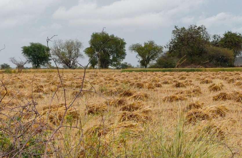 खेतों में कटी फसल में भर गया बारिश का पानी