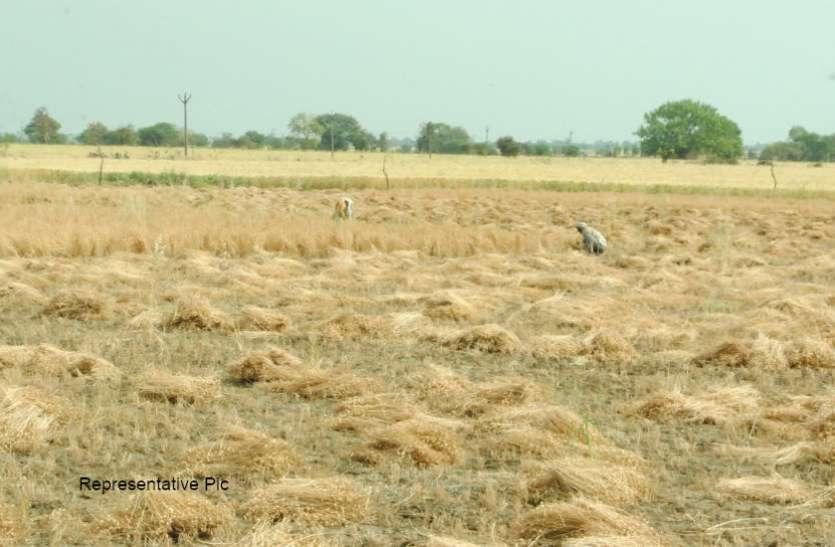 कोरोना वायरस : मजदूरों के पलायन से राजस्थान के किसानों को हो रही मुश्किलें