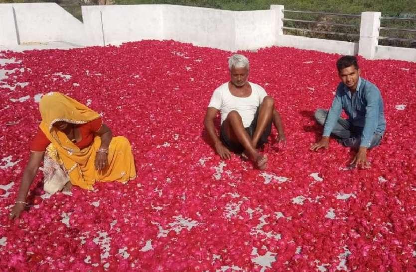 फूल उत्पादक किसानों में छाई मायूसी, लॉकडाउन में बर्बाद हुई गुलाब की खेती