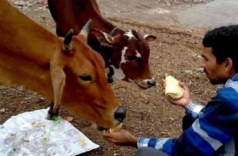 लॉकडाउन के दौरान बेजुबानों की मदद के लिए हर घर से जुटाई जाएगी एक-एक रोटी