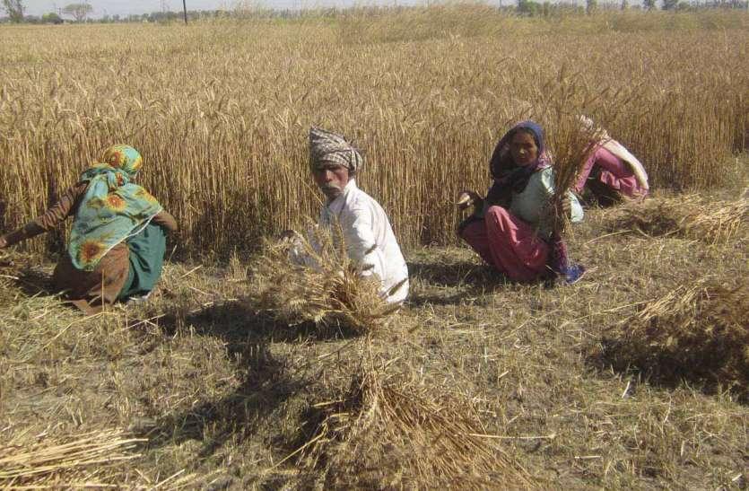 किसानों को गाइड करने की जरूरत के लिए इमेज नतीजे