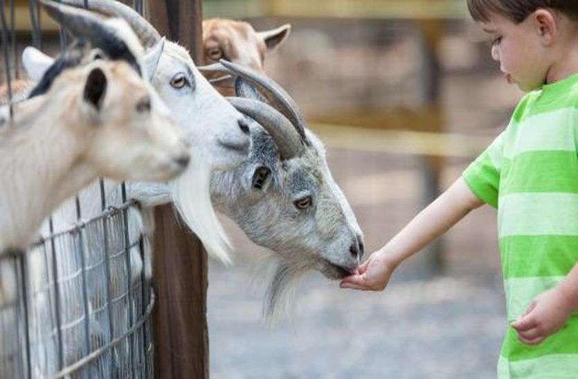 लॉकडाउन से जाम हुआ दाना तो पशुओं को कहां से खिलाएं खाना