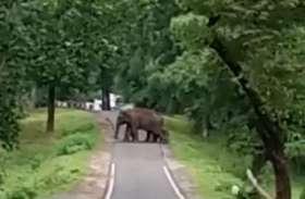 video: हाथियों ने नन्हे मेहमान को कुछ इस तरह से कराया सड़क पार