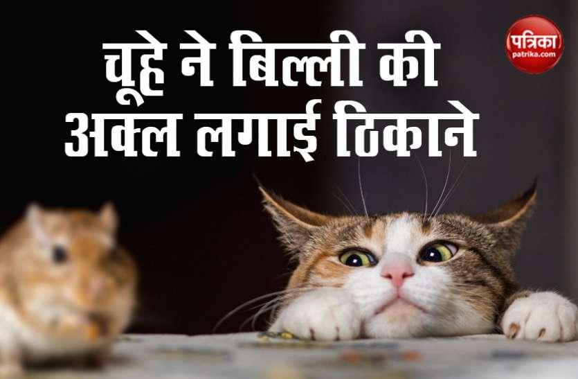 चूहे-बिल्ली के बीच हुआ भीषण युद्ध, हवा में उड़कर बिल्ली पर किया अटैक... देखें Video