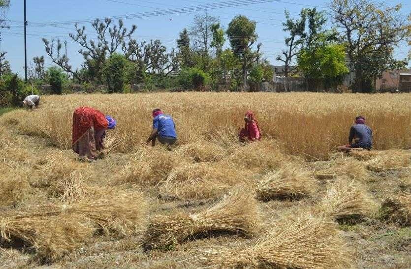 kishangrh_किसानों से सीधी खरीद का मिलेगा लाईसेंस