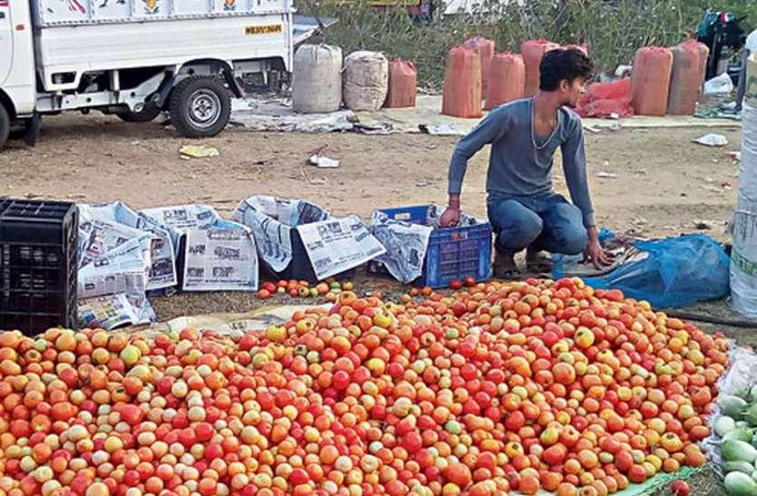 Corona Effect नहीं मिले खरीदार, किसानों ने टमाटर की खड़ी फसल में छोड़ दिए जानवर