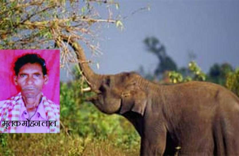 लकड़ी बीनने गए वृद्ध को हाथी ने मार डाला, बार नवापारा अभयारण्य की घटना