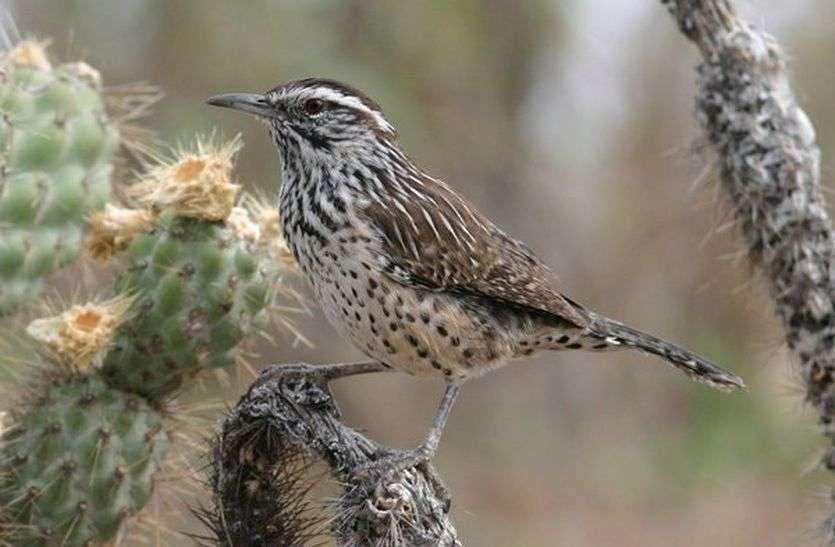 नेस्टिंग सीजन में बढ़ा पक्षियों का कलरव, टेरिटोरियल फाइट भी हुई कम