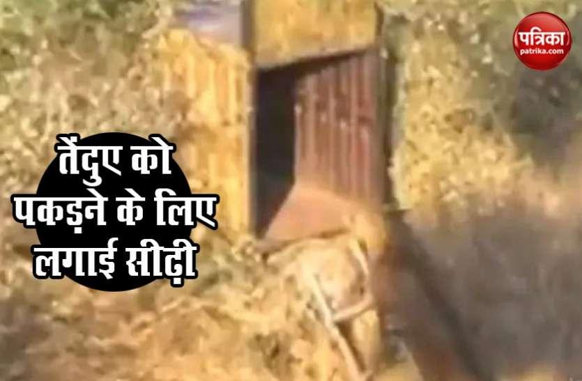 तेंदुए को पिंजरे में कैद करने के लिए लगाई अनोखी तरकीब..देखें पूरा Video