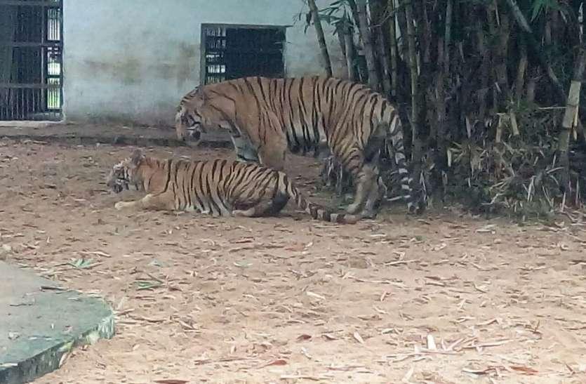 ... लॉकडाउन, मैत्रीबाग में वन्य प्राणियों को मिल रहा जंगल जैसा प्राकृतिक वातावरण