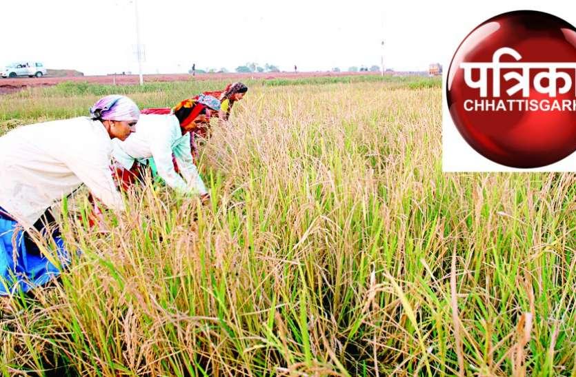 किसान संगठनों ने की रबी की सरकारी खरीदी करने की मांग, मुख्यमंत्री को लिखा पत्र