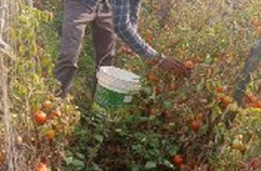 टमाटर-प्याज का किसानों को नहीं मिल रहा भाव