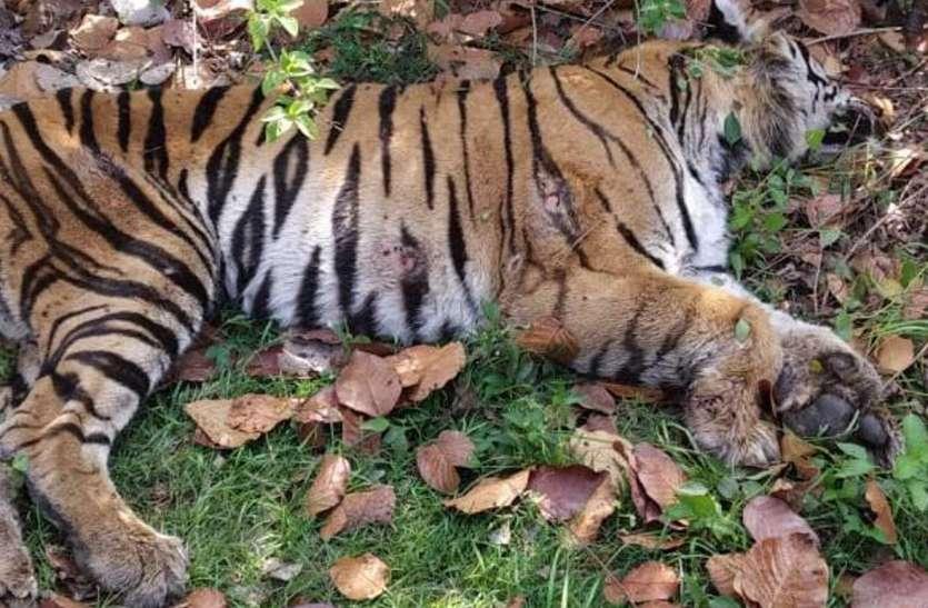 बांधवगढ़: नहीं थम रहा बाघों की मौत का सिलसिला, लॉकडाउन के भीतर दो मौत