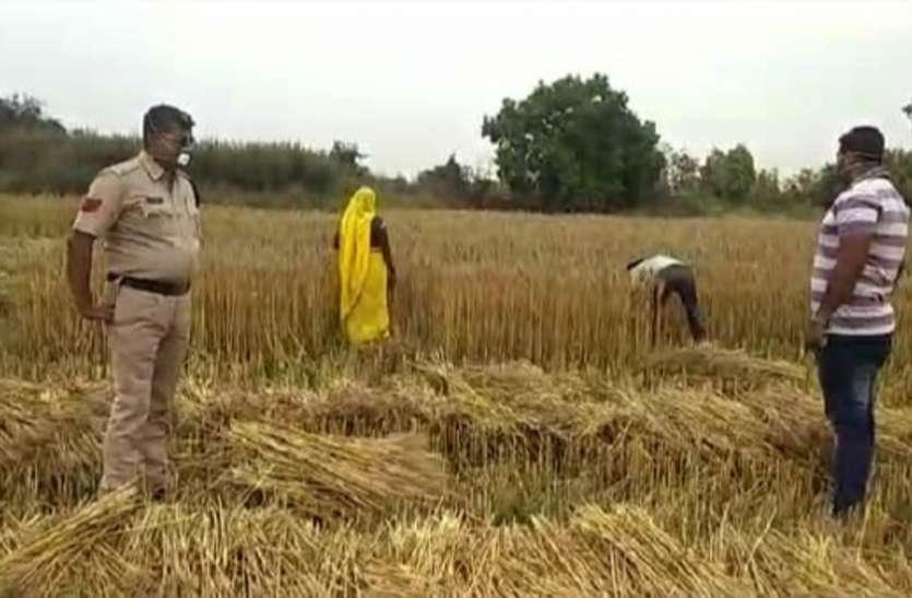 पत्रिका अभियान - गांव के पांव : किसानों ने फसल की कर ली मढ़ाई