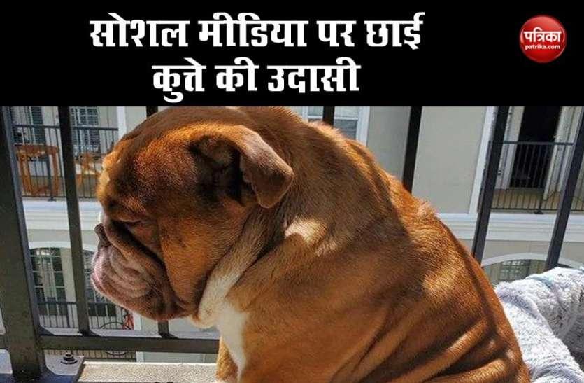 सोशल मीडिया पर छाई कुत्ते की उदासी, वायरल फोटो देख दुनिया बयां करने लगी अपना दर्द