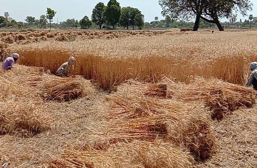 शासन से राहत मिलने पर किसानों के चेहरे खिले, अब इन फसलों की तैयारी में जुटे, क्या बोले किसान व बीज विक्रेता