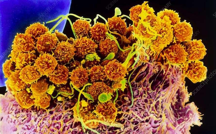 एयर कंडीशन से भी फ़ैल सकता है कोरोना संक्रमण, दो शोधों में सामने आये चौंकाने वाले परिणाम