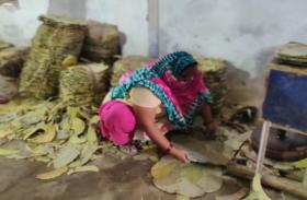 पत्ते चुनने वाले आदिवासियों को यूं मिलेगी बड़ी आर्थिक मदद