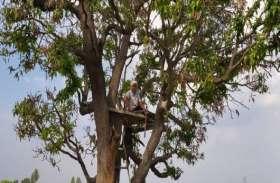 जींद के गांव पेगा में 44 दिन से पेड़ पर चारपाई डालकर रह रहा किसान